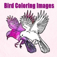 Bird Coloring Images